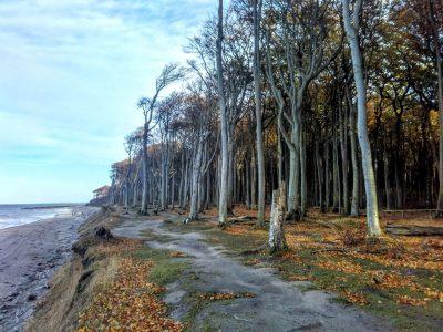 Gespensterwald in Nienhagen